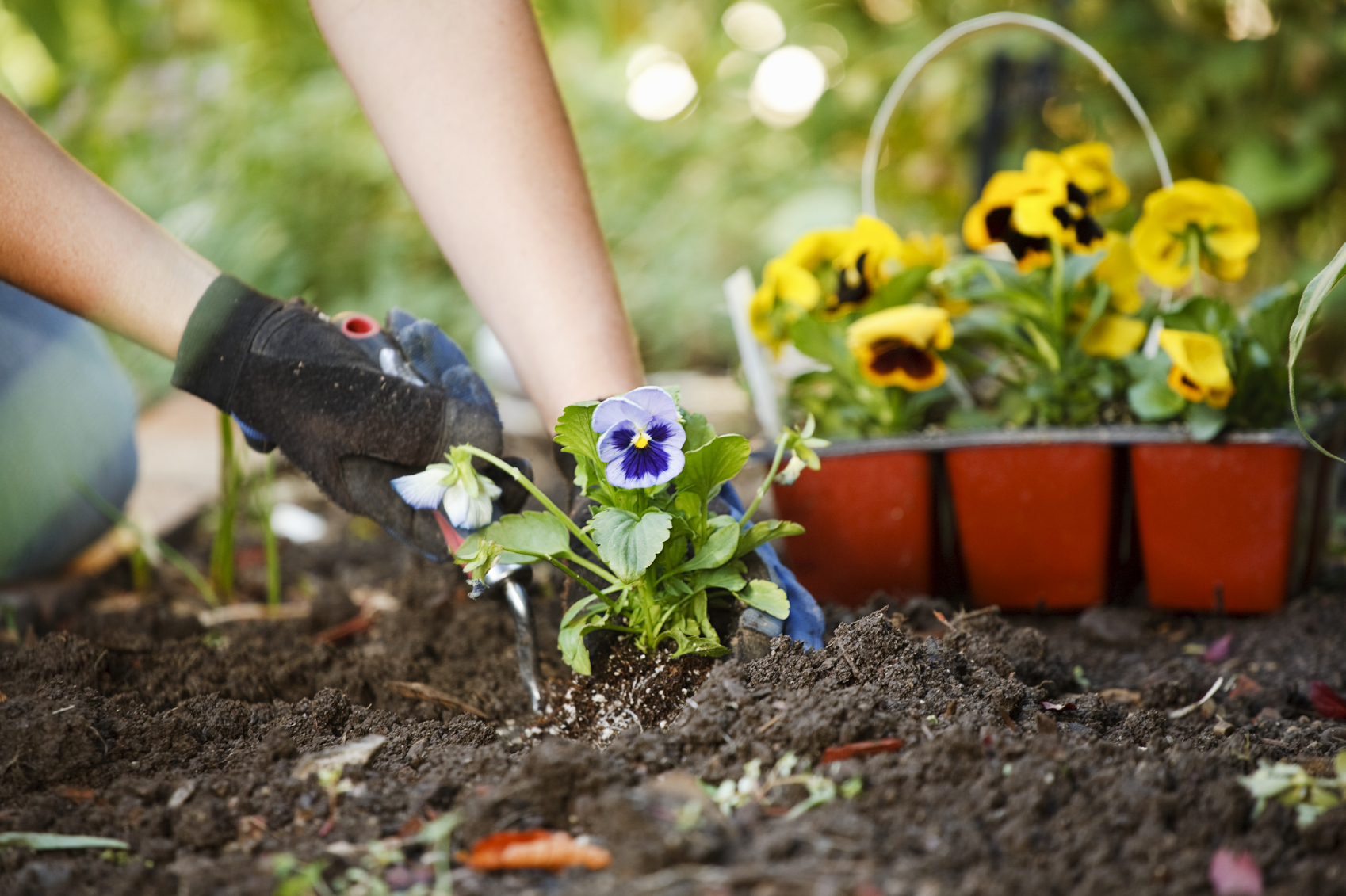 Посадка и уход за садовыми цветами с